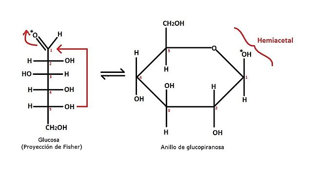 Carbono anomérico: características e exemplos 2
