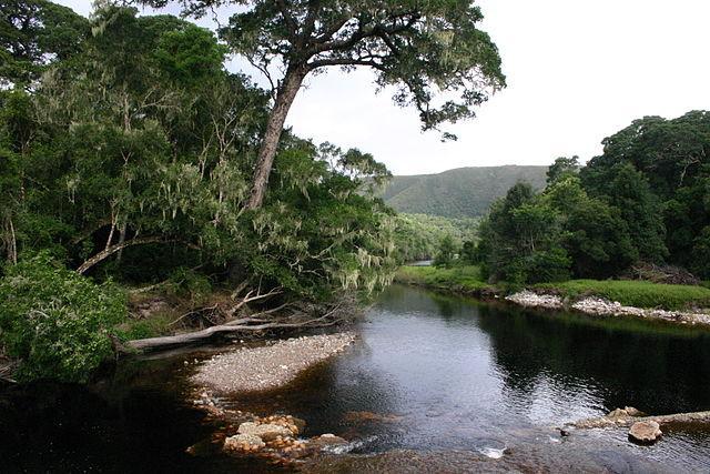 Floresta ribeirinha: características, distribuição, flora e fauna 1