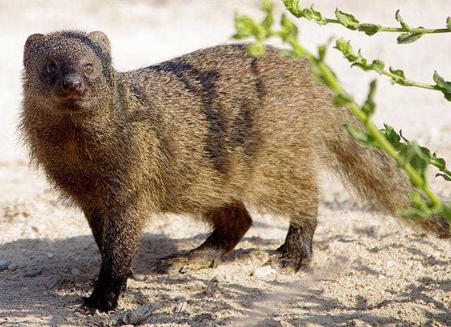 26 Animais da floresta e suas características (com imagens) 2