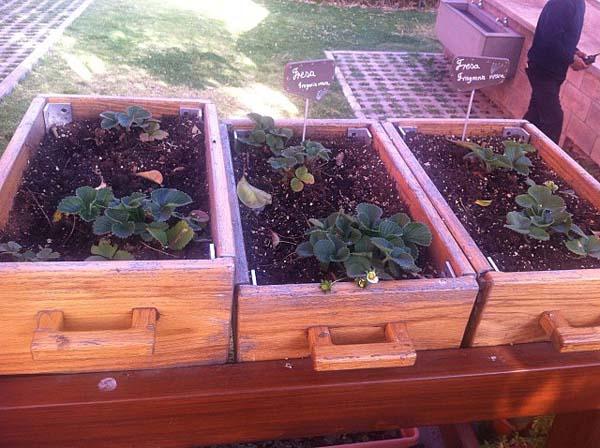 Jardins urbanos: características, tipos, benefícios 2