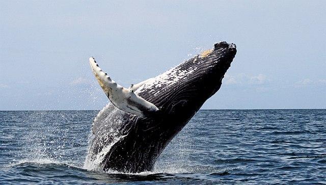 Mar frio da corrente peruana: características, causas 1