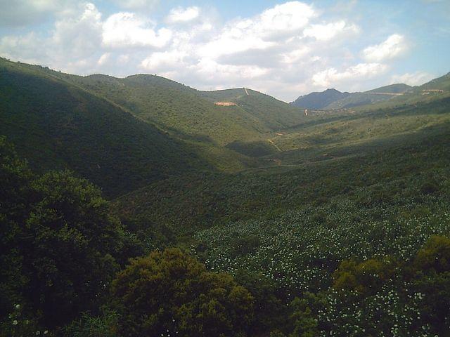 Cistus ladanifer: habitat, propriedades, cuidados, doenças 8