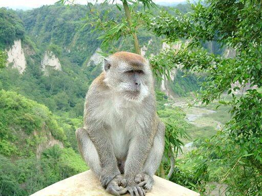 Parque Nacional de Komodo: História, Localização, Flora, Fauna 9