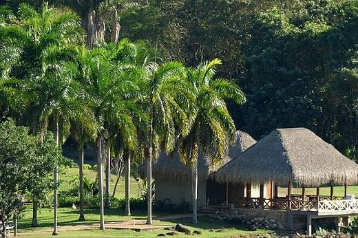 Palma real: características, habitat, usos, cuidados 5