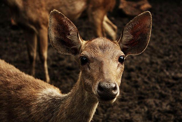 Parque Nacional de Komodo: História, Localização, Flora, Fauna 7