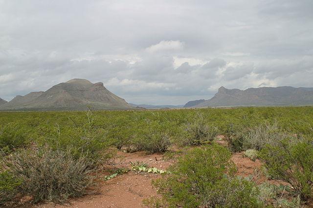 Governador: características, habitat, propriedades medicinais 5
