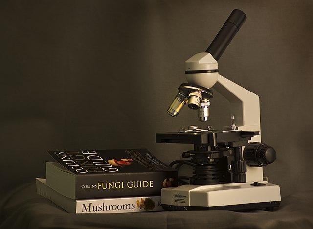 Micologia: história, que estudos e ramos 3