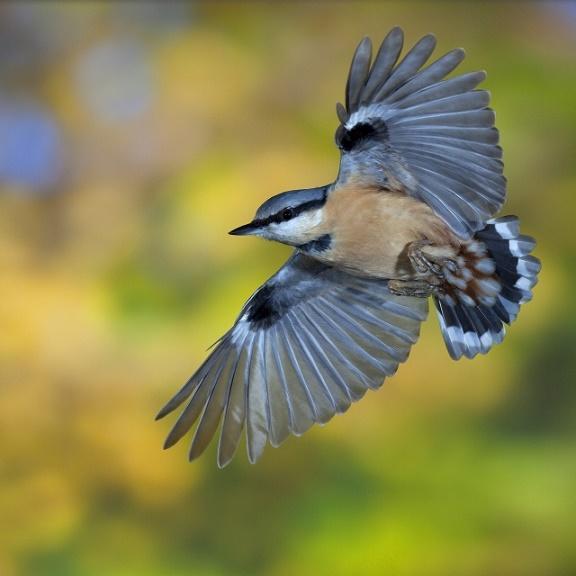 Floresta temperada: característica, flora, fauna, clima 7