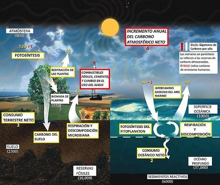 Ciclo do carbono: características, reservatórios, componentes 3
