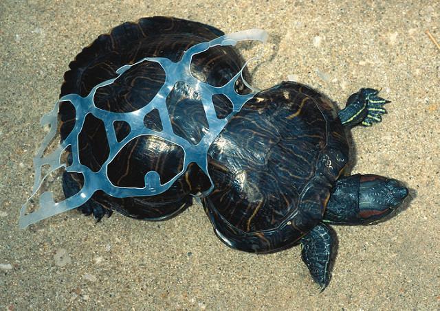 Poluição do lixo: causas, consequências e exemplos 4