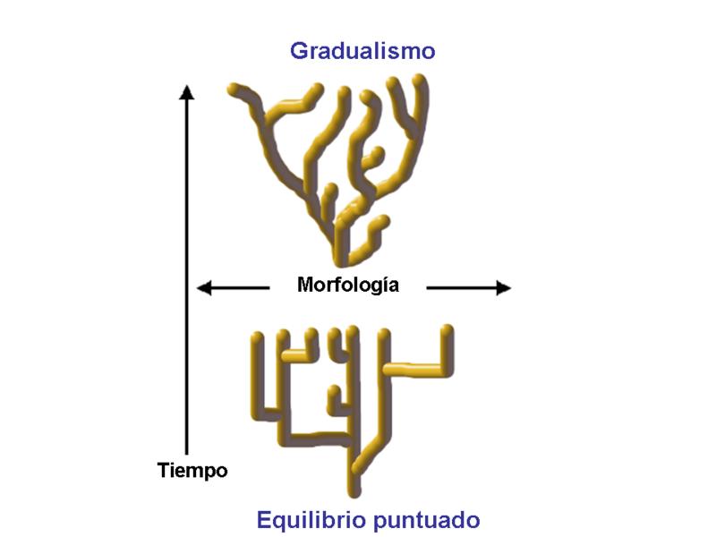 Equilíbrio pontuado: o que é, referencial teórico e crítica 1
