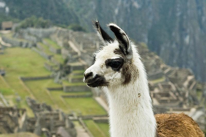 Quais são os recursos naturais do Peru? 5