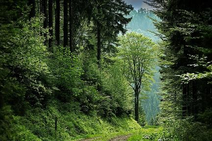 Floresta temperada: característica, flora, fauna, clima 9