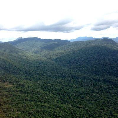 Fatores abióticos da selva e suas características 1