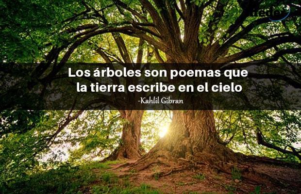 As 101 melhores frases de árvores 15