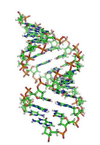 DNA: história, funções, estrutura, componentes 6