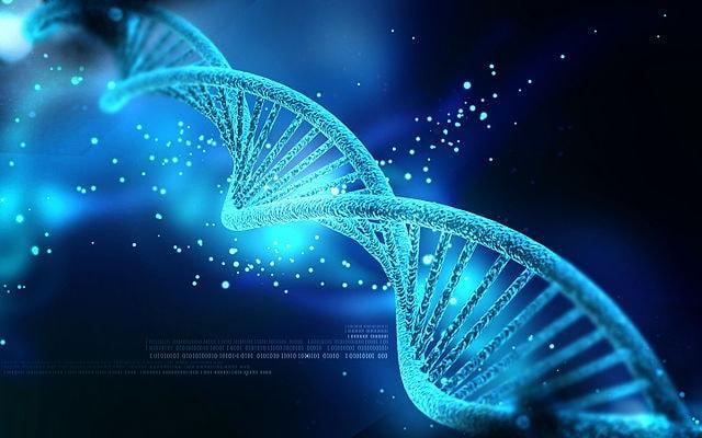 DNA: história, funções, estrutura, componentes 1