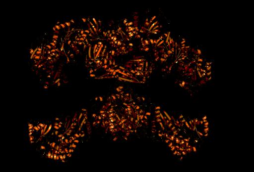 Ácidos graxos: estrutura, tipos, funções, biossíntese 4