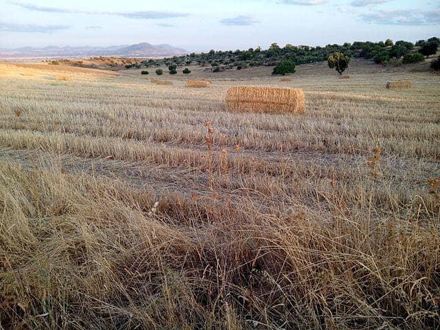 Agricultura temporária: características, vantagens e desvantagens 1