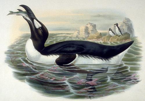 71 animais extintos em todo o mundo (e causas) 12