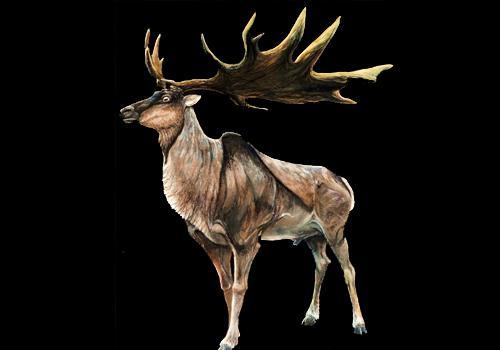 71 animais extintos em todo o mundo (e causas) 5