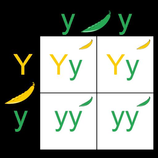 Alelo dominante: características e exemplos 1