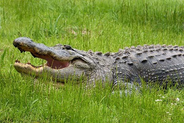 Pantanal: características, relevo, flora, clima, fauna, exemplos 5