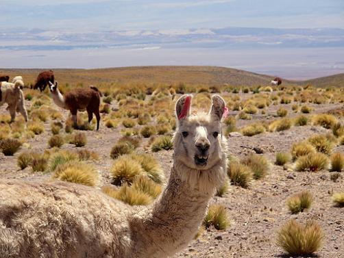 Zona Norte do Chile: Clima, Flora, Fauna e Recursos 3