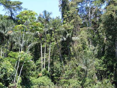 Como está o baixo relevo florestal? 1