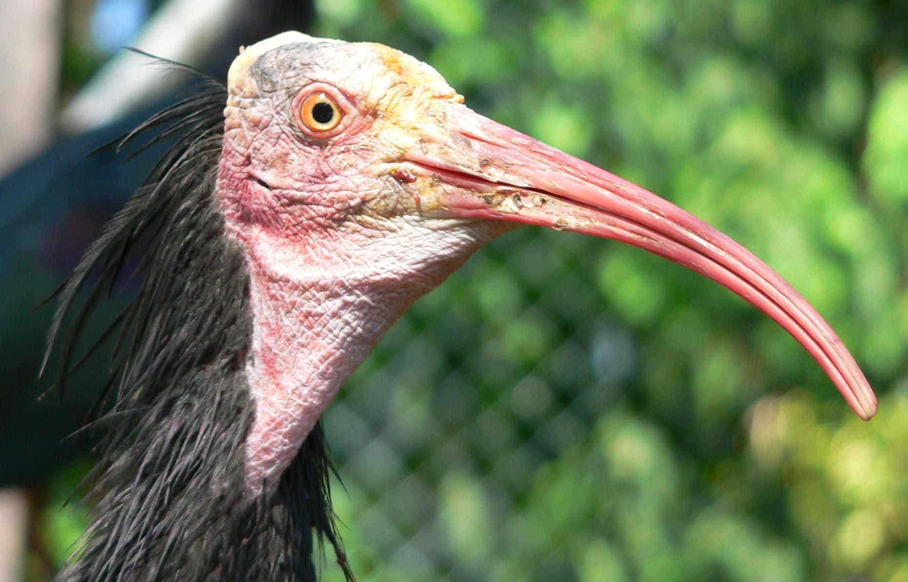 10 animais em perigo de extinção na Espanha 1