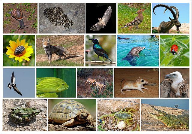 Perda de biodiversidade: significado, causas, consequências 1
