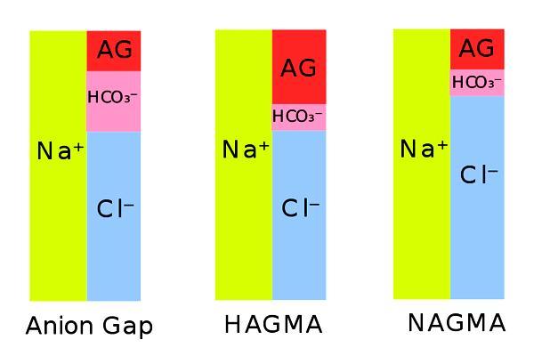 Anion gap: valores, aplicações e doenças 1