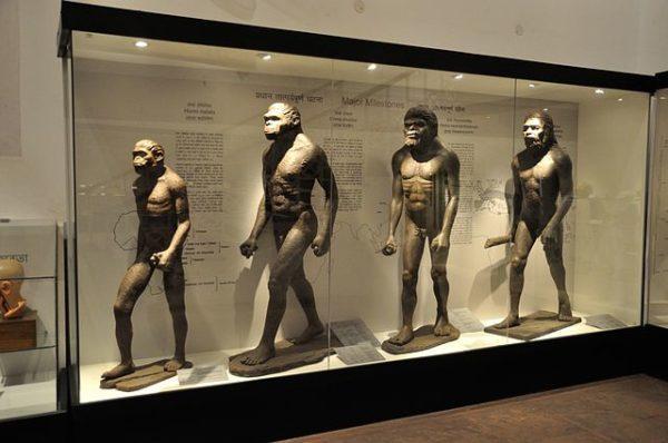 Antropologia física: história, o que estuda e ramifica 1