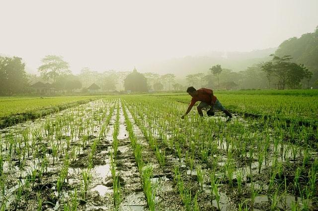 5 Aplicações da Biologia na Agricultura 1
