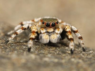 Aranhas: características, habitat, reprodução e alimentação 1