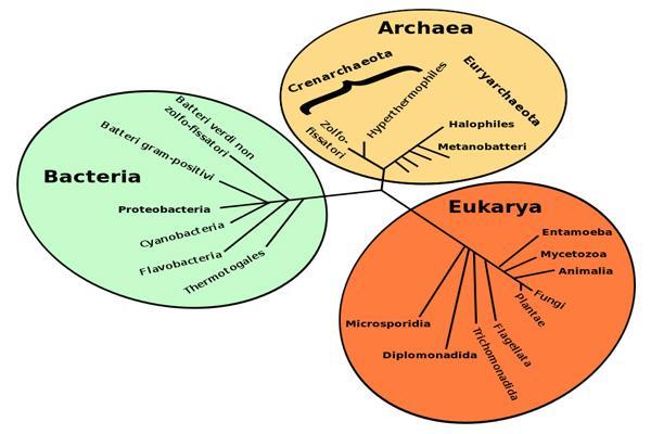 Bactérias: características, morfologia, tipos, reprodução 2