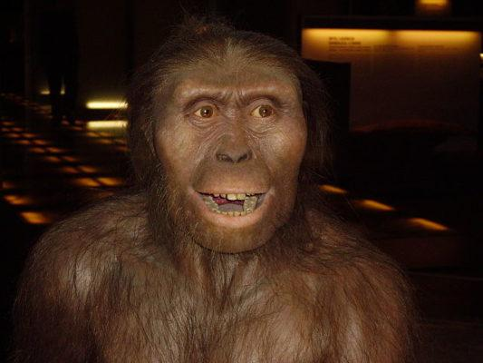 Evolução do homem: estágios e suas características 4