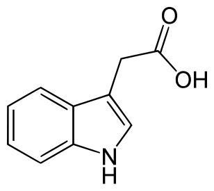 Fitohormônios: tipos e suas características 2