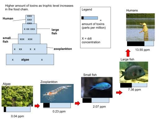 Biomagnificação: processos, efeitos, substâncias mais favoráveis 1
