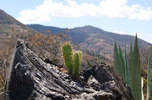 Os 10 biomas do México e suas características 1