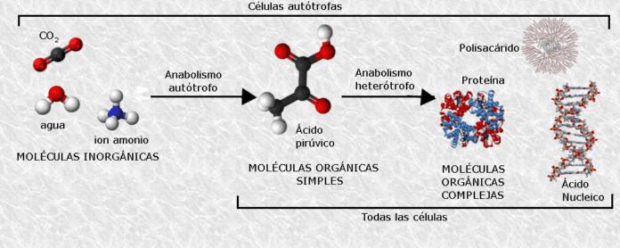 Biomoléculas: Classificação e Principais Funções 1