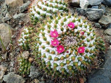 Aridoamérica: Características, Clima, Flora e Fauna 3
