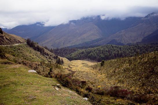 Floresta andina: características, localização, flora, fauna e clima 1