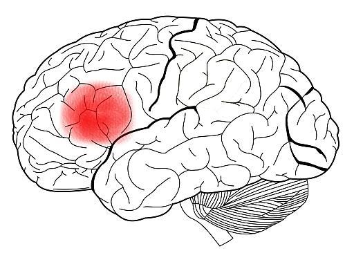 Área de perfuração: funções, anatomia e doenças 3