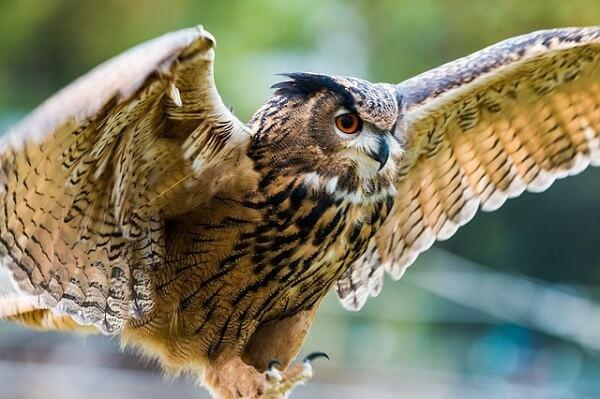 100 fatos curiosos sobre os animais que o surpreenderão 6