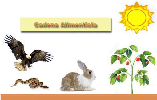 Cadeia Alimentar Florestal: Principais Características