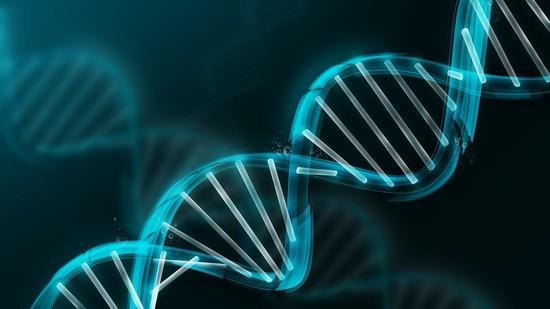 O que são Euchromatin e Heterocromatin? 1