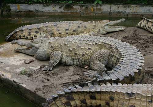20 animais em extinção na Venezuela 17