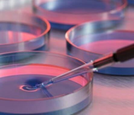 Placa de Petri: características, usos e história 1