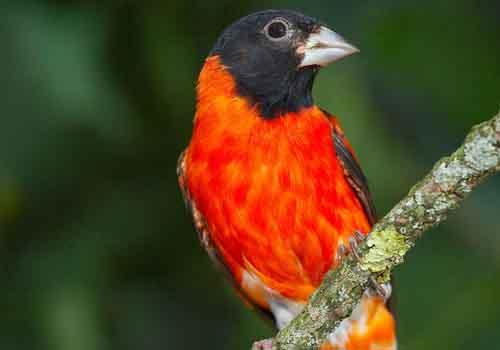 20 animais em extinção na Venezuela 5